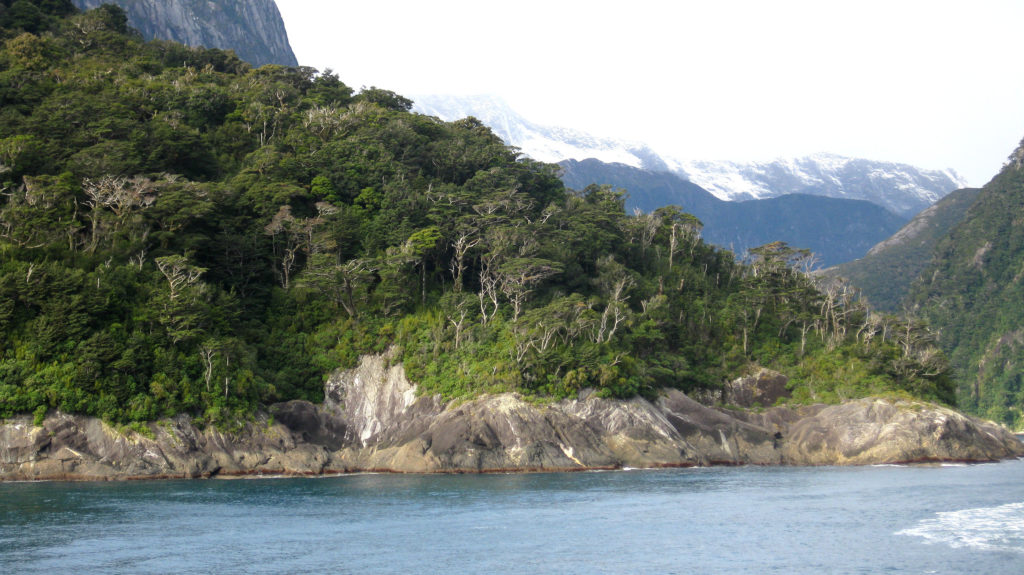 Milford Sound Küste