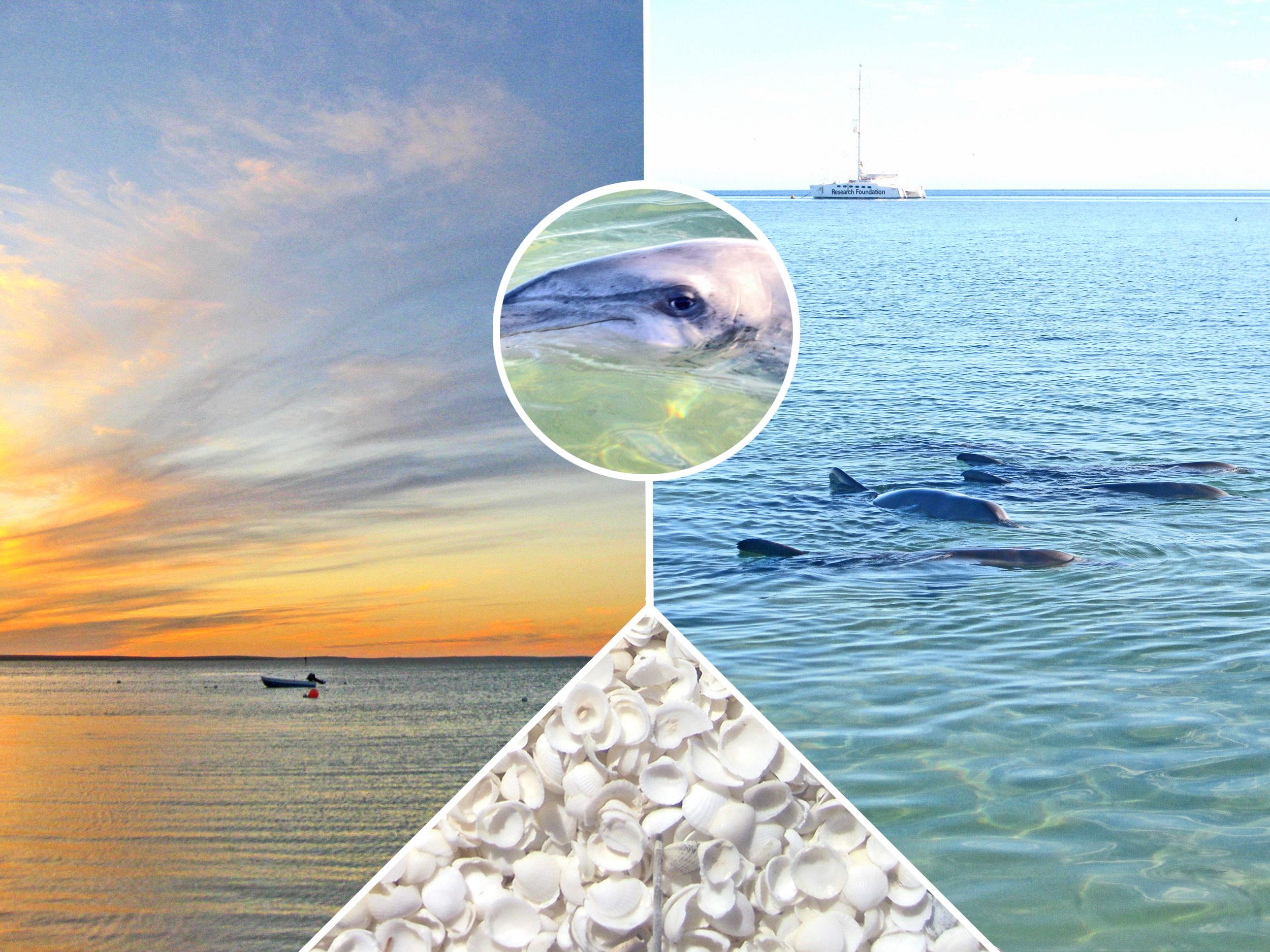 Delfine füttern in Monkey Mia – Reisetipp für deine Bucket List in Australien