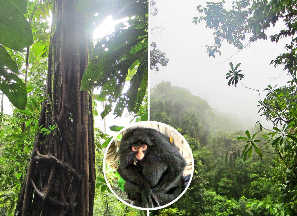Dschungelprojekt Tierschutz