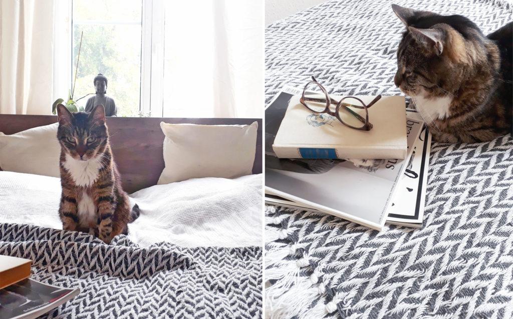Katze im Himmelbett