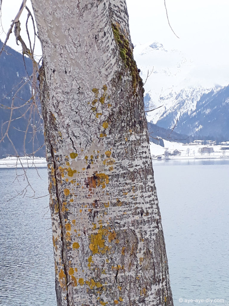 Baumflechten vor blauem See