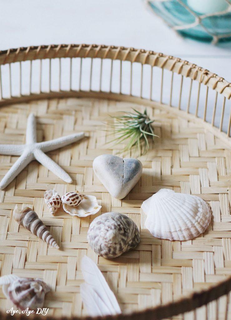 Muscheln und Maritime Naturmaterialien
