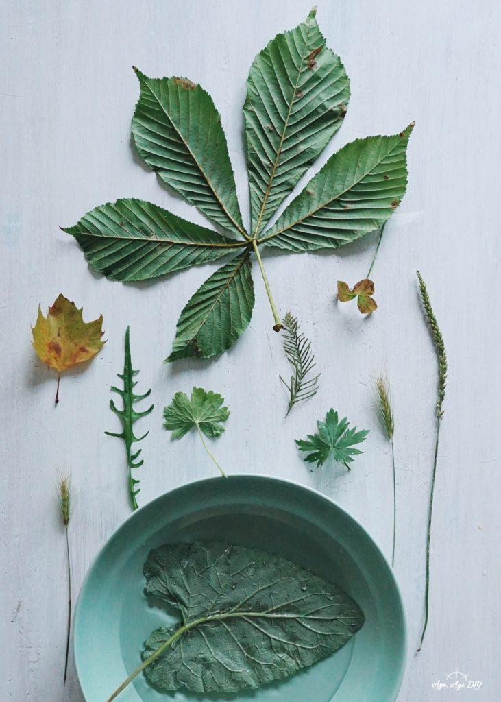 Auswahl an geeigneten Blättern für Blätterdruck